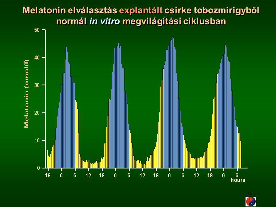 10 Melatonin elválasztás explantált csirke tobozmirigyből normál in vitro megvilágítási ciklusban Melatonin elválasztás explantált csirke tobozmirigyb