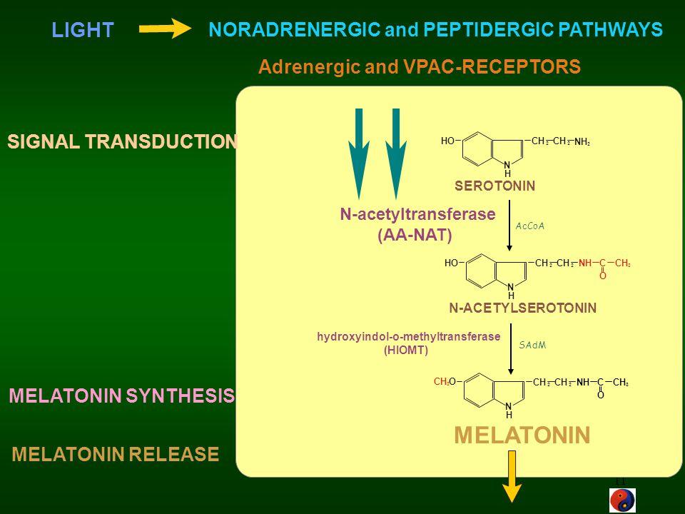 11 CH 2 2 NH 2 HO N H NH CH 3 O C 2 2 HO N H NH CH 3 O C 2 2 O N H 3 SEROTONIN N-ACETYLSEROTONIN MELATONIN N-acetyltransferase (AA-NAT) hydroxyindol-o