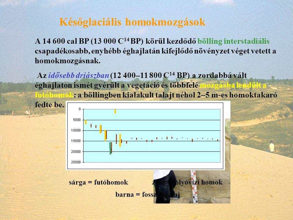 Későglaciális homokmozgások A 14 600 cal BP (13 000 C 14 BP) körül kezdődő bölling interstadiális csapadékosabb, enyhébb éghajlatán kifejlődő növényze