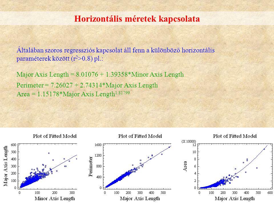 Horizontális méretek kapcsolata Általában szoros regressziós kapcsolat áll fenn a különböző horizontális paraméterek között (r 2 >0.8) pl.: Major Axis