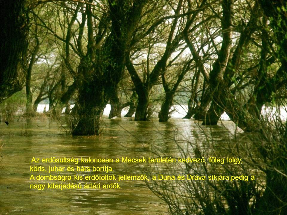 Az erdősültség különösen a Mecsek területén kedvező, főleg tölgy, kőris, juhar és hárs borítja. A dombságra kis erdőfoltok jellemzők, a Duna és Dráva