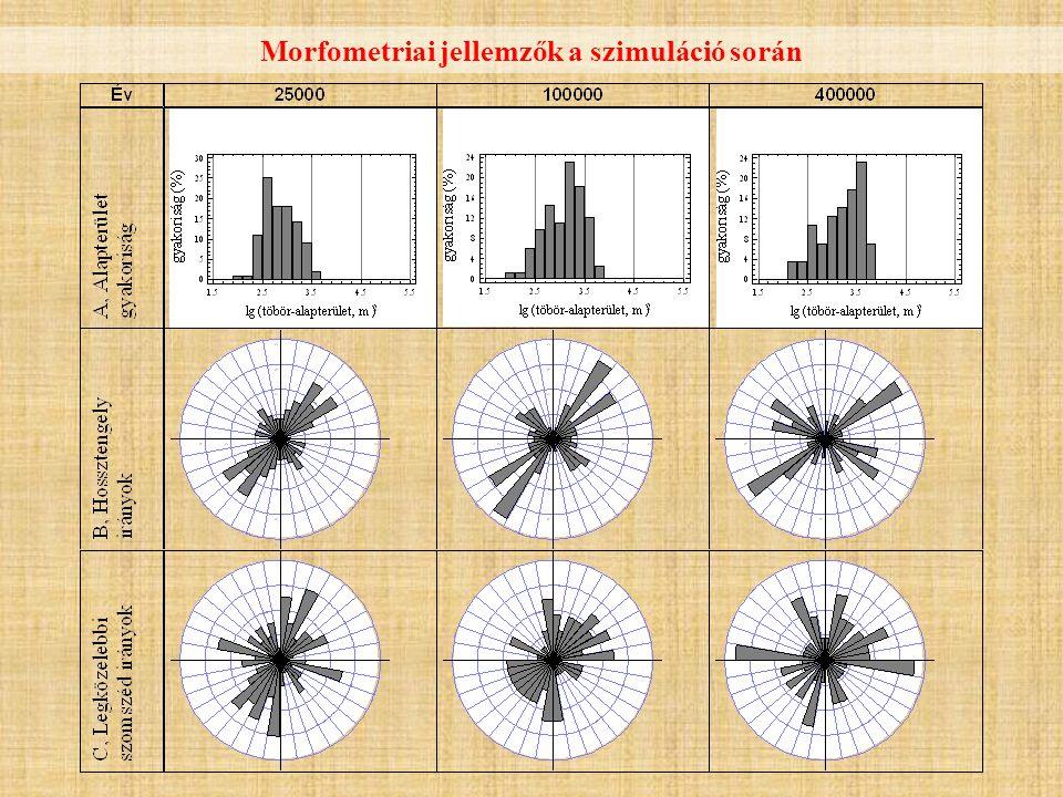 Morfometriai jellemzők a szimuláció során