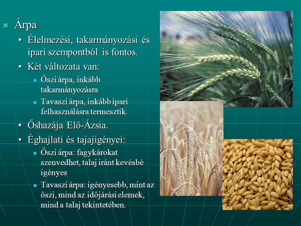 Árpa Árpa Élelmezési, takarmányozási és ipari szempontból is fontos.Élelmezési, takarmányozási és ipari szempontból is fontos.