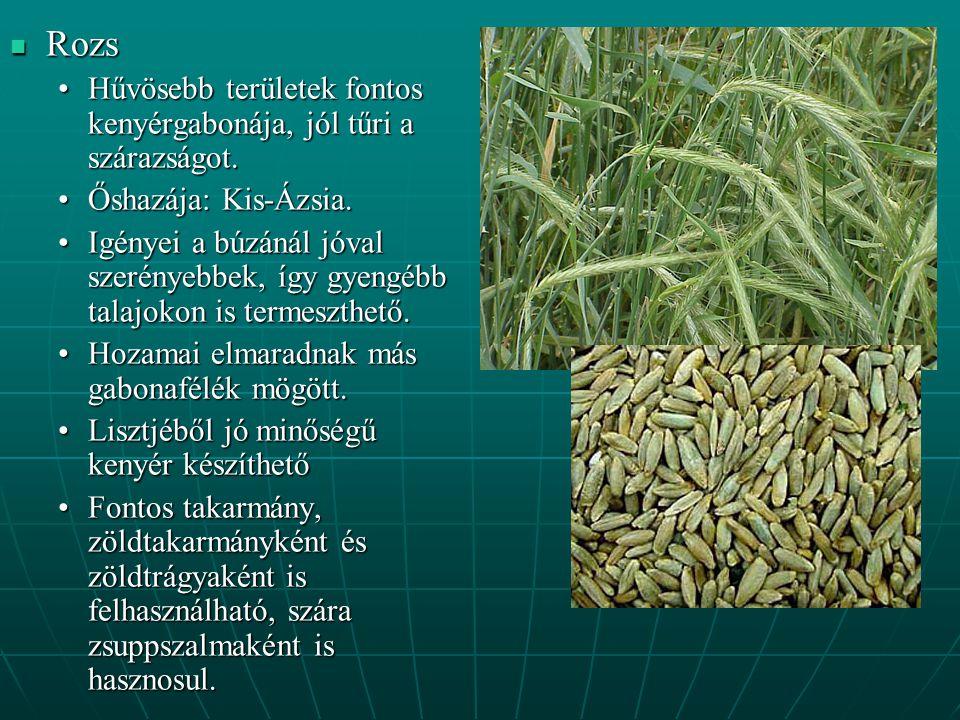 Rozs Rozs Hűvösebb területek fontos kenyérgabonája, jól tűri a szárazságot.Hűvösebb területek fontos kenyérgabonája, jól tűri a szárazságot.