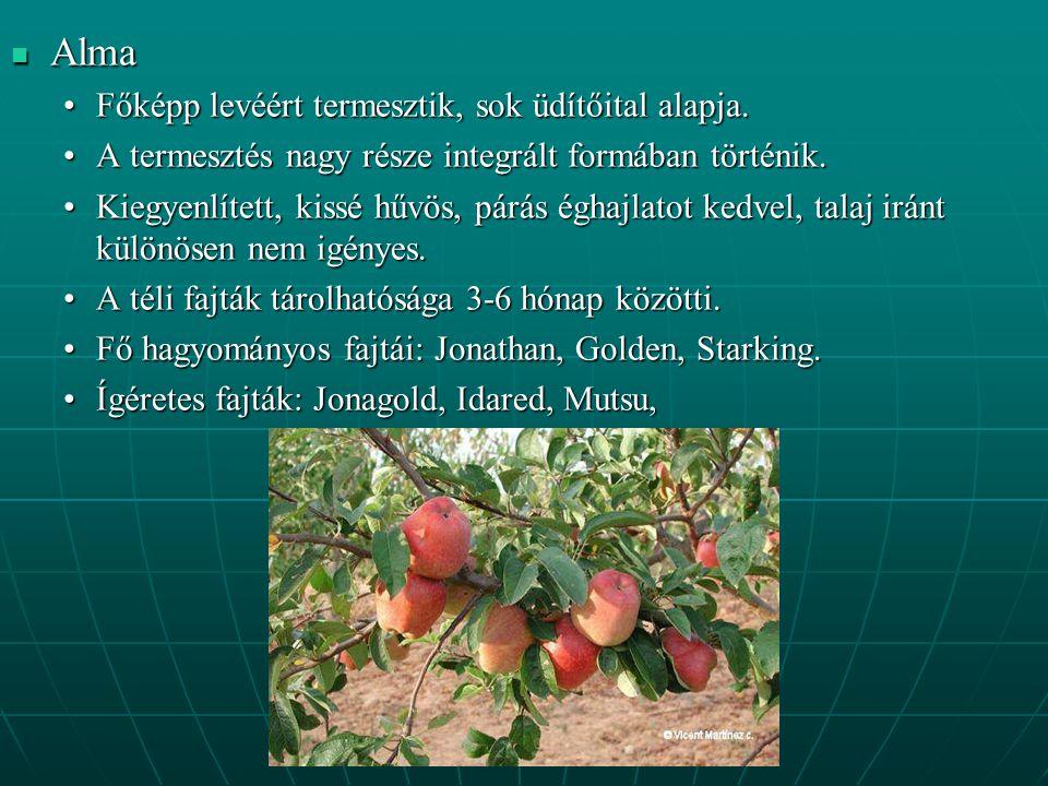 Alma Alma Főképp levéért termesztik, sok üdítőital alapja.Főképp levéért termesztik, sok üdítőital alapja.