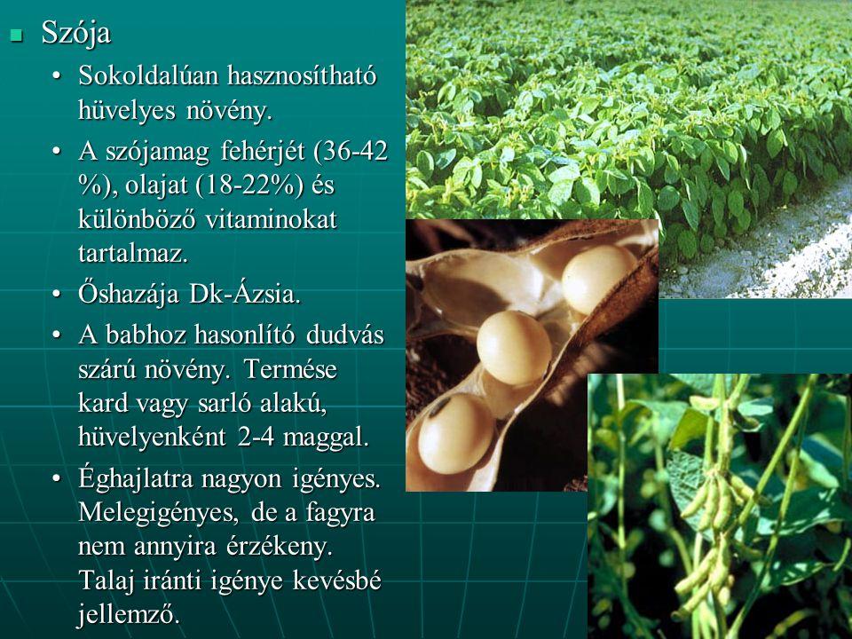Szója Szója Sokoldalúan hasznosítható hüvelyes növény.Sokoldalúan hasznosítható hüvelyes növény.
