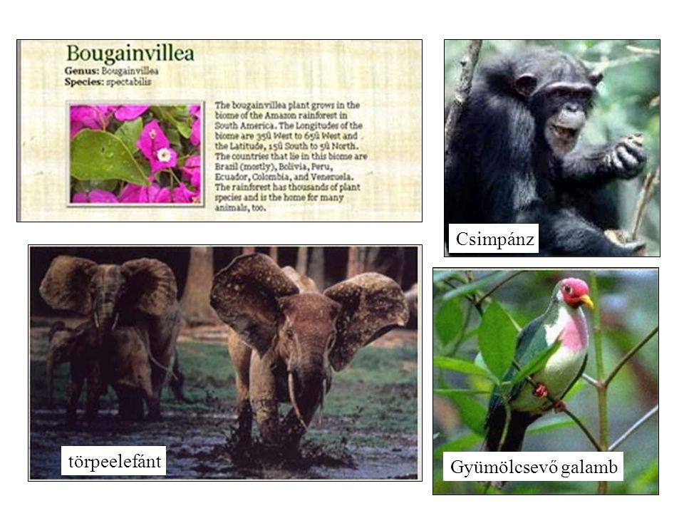 törpeelefánt CsimpánzGyümölcsevő galamb