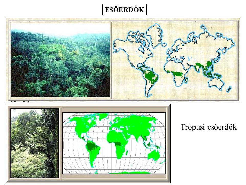 ESŐERDŐK Trópusi esőerdők