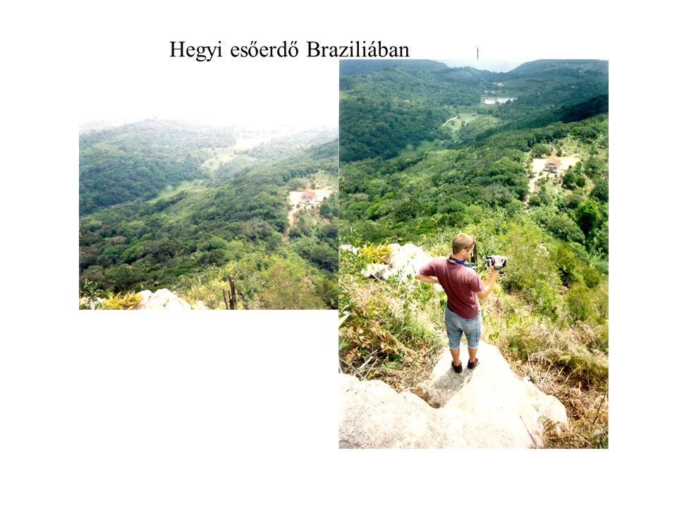 Hegyi esőerdő Braziliában