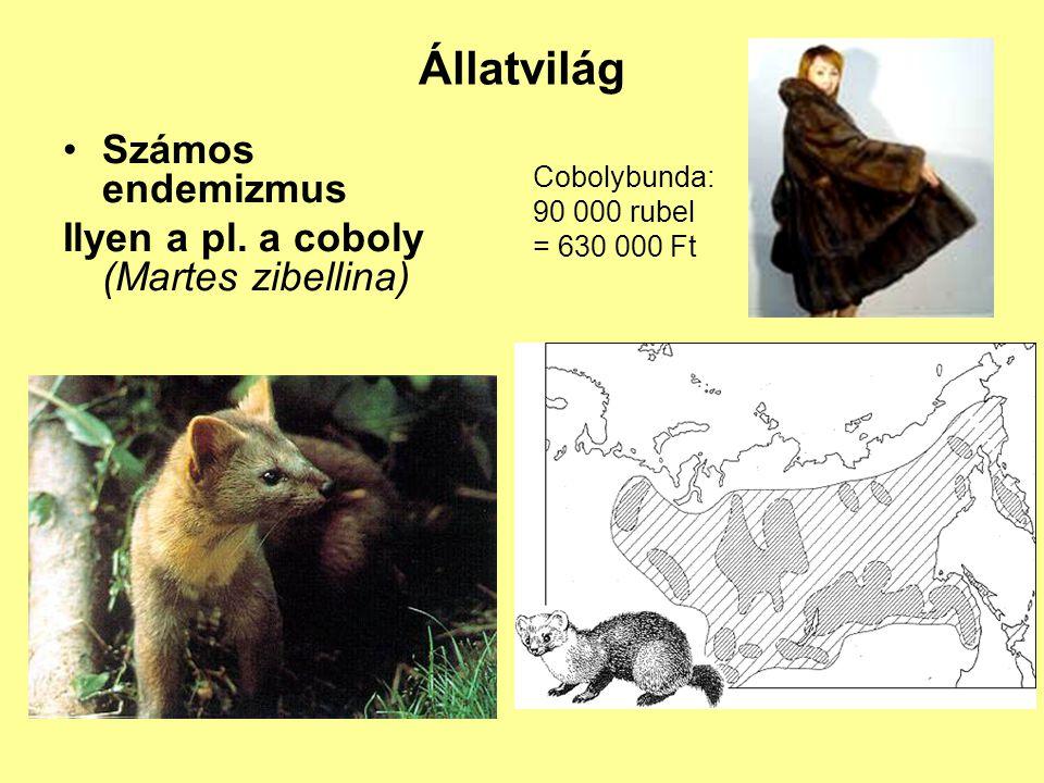 Állatvilág Számos endemizmus Ilyen a pl. a coboly (Martes zibellina) Cobolybunda: 90 000 rubel = 630 000 Ft