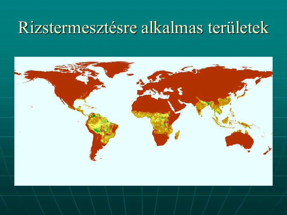 Rizstermesztésre vonatkozó adatok (2003) TermelőMennyiség (millió t) Kína162 India130 Indonézia52 Banglades39 Vietnám34 Világ összesen 586