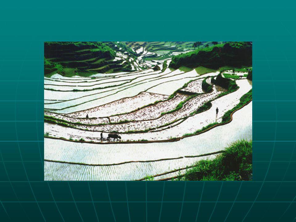 Földimogyoró Földimogyoró Őshazája Peru és ÉK-Brazília.Őshazája Peru és ÉK-Brazília.