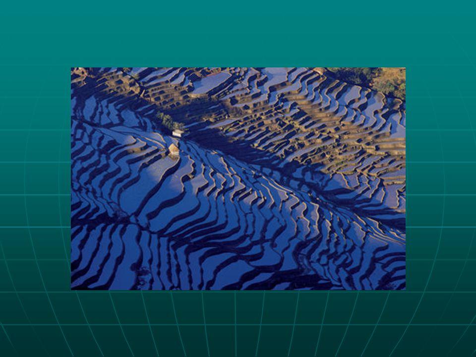 Földimogyoró-termesztésre vonatkozó adatok (2003) TermelőMennyiség (millió t) Kína13,5 India7,7 Nigéria2,7 USA 1,9 1,9 Indonézia1,4 Világ összesen 35,3