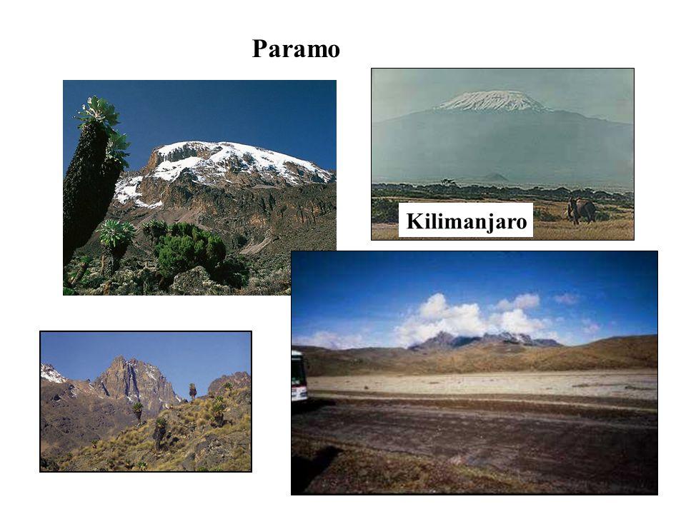 Paramo Kilimanjaro