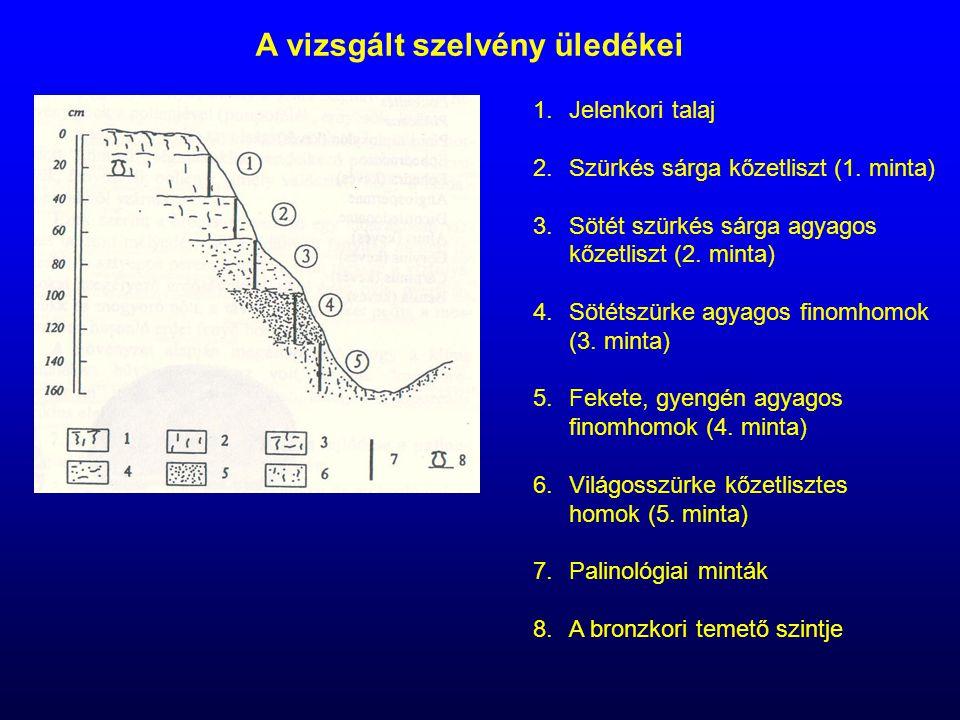 A vizsgált szelvény üledékei 1.Jelenkori talaj 2.Szürkés sárga kőzetliszt (1. minta) 3.Sötét szürkés sárga agyagos kőzetliszt (2. minta) 4.Sötétszürke