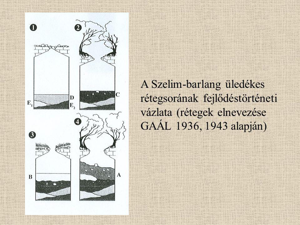 A Szelim-barlang üledékes rétegsorának fejlődéstörténeti vázlata (rétegek elnevezése GAÁL 1936, 1943 alapján)