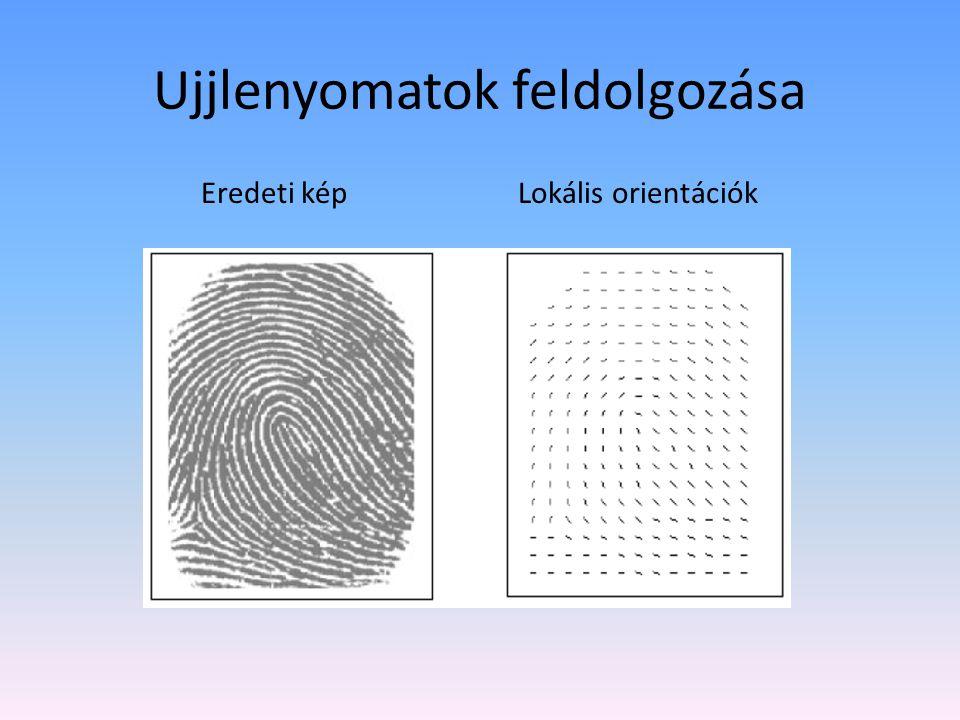 Ujjlenyomatok feldolgozása Eredeti kép Lokális orientációk