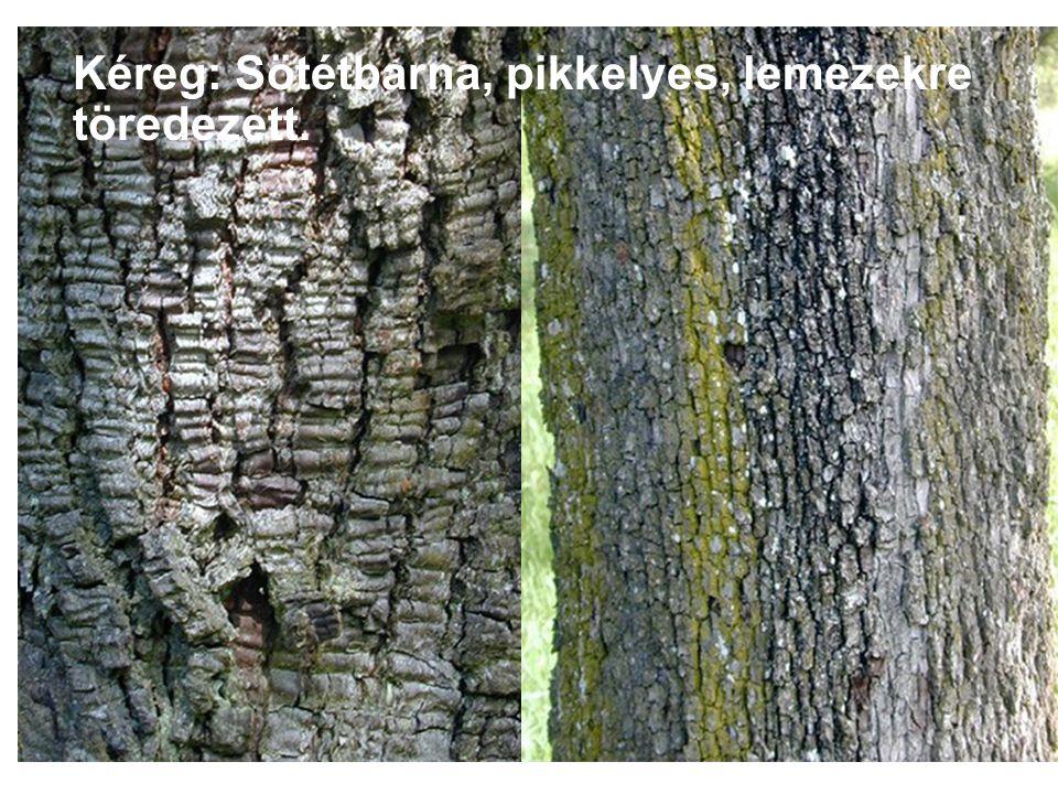 . Levél: Szárnyaltak, 22 cm-esek, legfeljebb 21 keskeny, fogazott, 6 cm hosszú, 1 cm széles levélkéből összetettek.