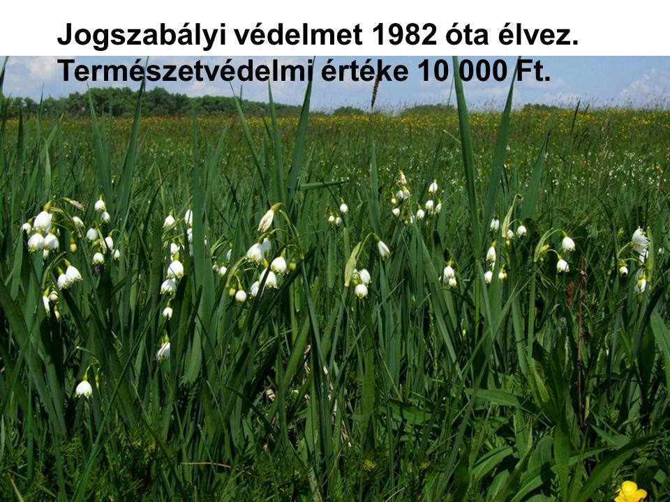 Jogszabályi védelmet 1982 óta élvez. Természetvédelmi értéke 10 000 Ft.