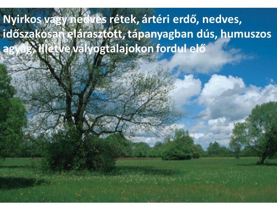 Nyirkos vagy nedves rétek, ártéri erdő, nedves, időszakosan elárasztott, tápanyagban dús, humuszos agyag, illetve vályogtalajokon fordul elő