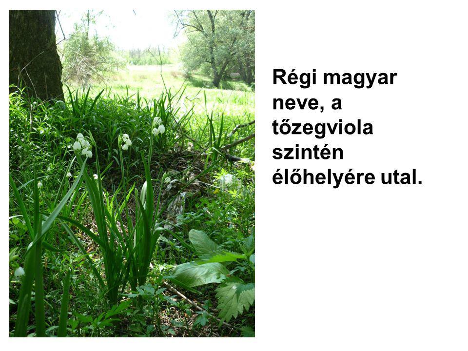 Régi magyar neve, a tőzegviola szintén élőhelyére utal.