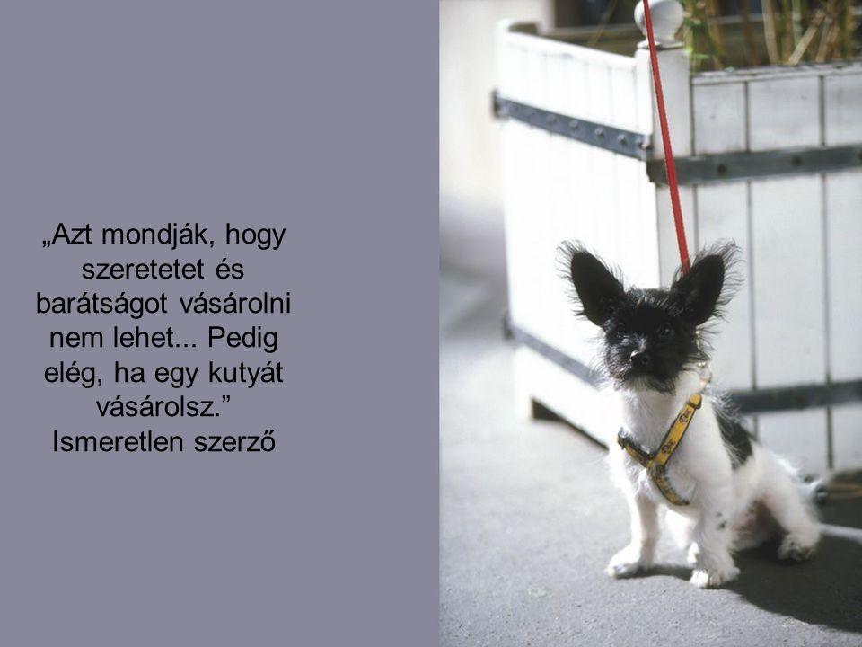 """""""Azt mondják, hogy szeretetet és barátságot vásárolni nem lehet... Pedig elég, ha egy kutyát vásárolsz."""" Ismeretlen szerző"""