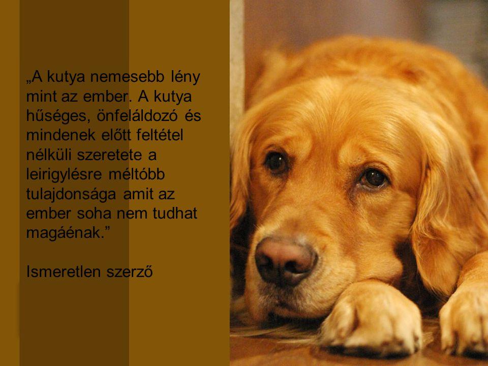 """""""A kutya nemesebb lény mint az ember. A kutya hűséges, önfeláldozó és mindenek előtt feltétel nélküli szeretete a leirigylésre méltóbb tulajdonsága am"""