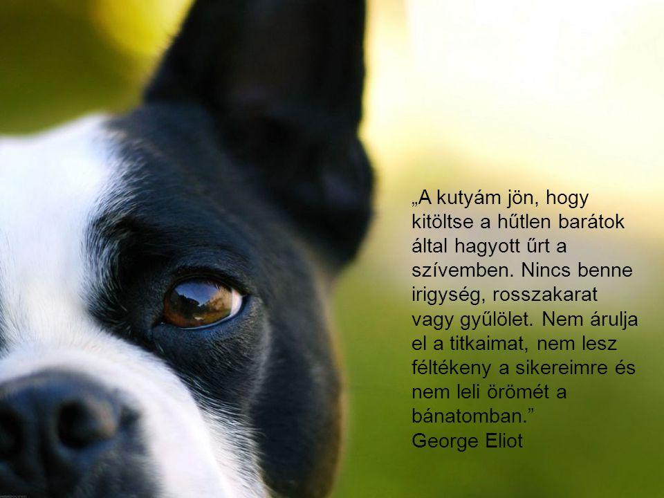 """""""A kutyám jön, hogy kitöltse a hűtlen barátok által hagyott űrt a szívemben. Nincs benne irigység, rosszakarat vagy gyűlölet. Nem árulja el a titkaima"""