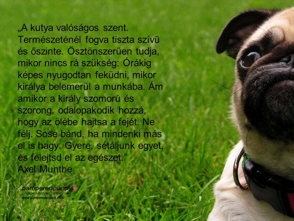 """""""A kutya valóságos szent. Természeténél fogva tiszta szívű és őszinte. Ösztönszerűen tudja, mikor nincs rá szükség: Órákig képes nyugodtan feküdni, mi"""