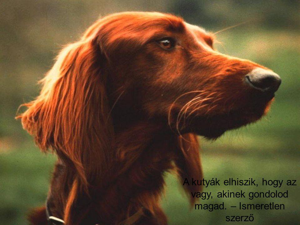 A kutyák elhiszik, hogy az vagy, akinek gondolod magad. – Ismeretlen szerző