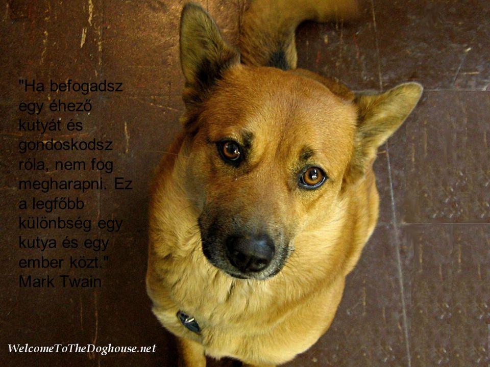 Ha befogadsz egy éhező kutyát és gondoskodsz róla, nem fog megharapni.