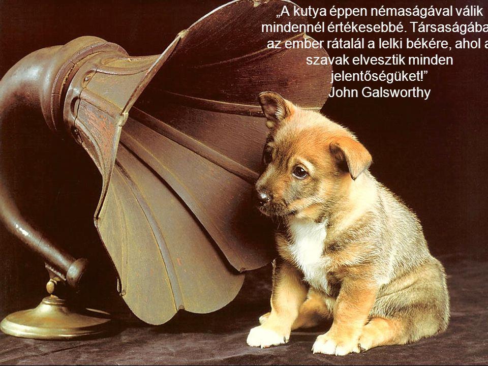 """""""A kutya éppen némaságával válik mindennél értékesebbé. Társaságában az ember rátalál a lelki békére, ahol a szavak elvesztik minden jelentőségüket!"""""""