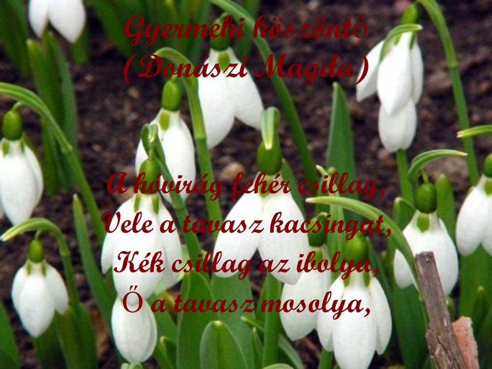 Gyermeki köszönt ő (Donászi Magda) A hóvirág fehér csillag, Vele a tavasz kacsingat, Kék csillag az ibolya, Ő a tavasz mosolya,