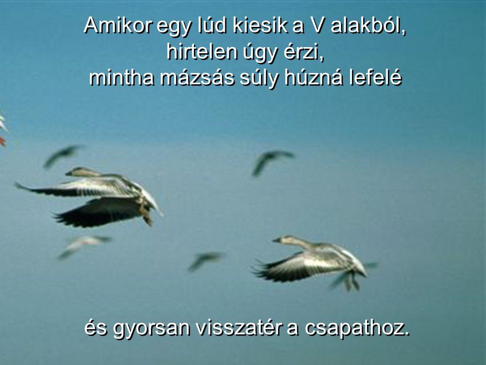 Amikor egy-egy madár suhint egyet a szárnyával, felhajtóerőt képez az őt követő madár számára. V alakban, az egész csapat legkevesebb 71 %-kal hosszab