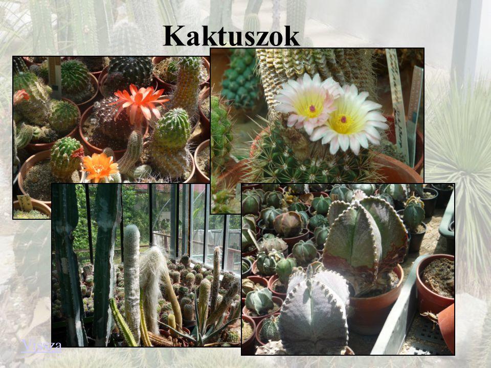 Kaktuszok Vissza