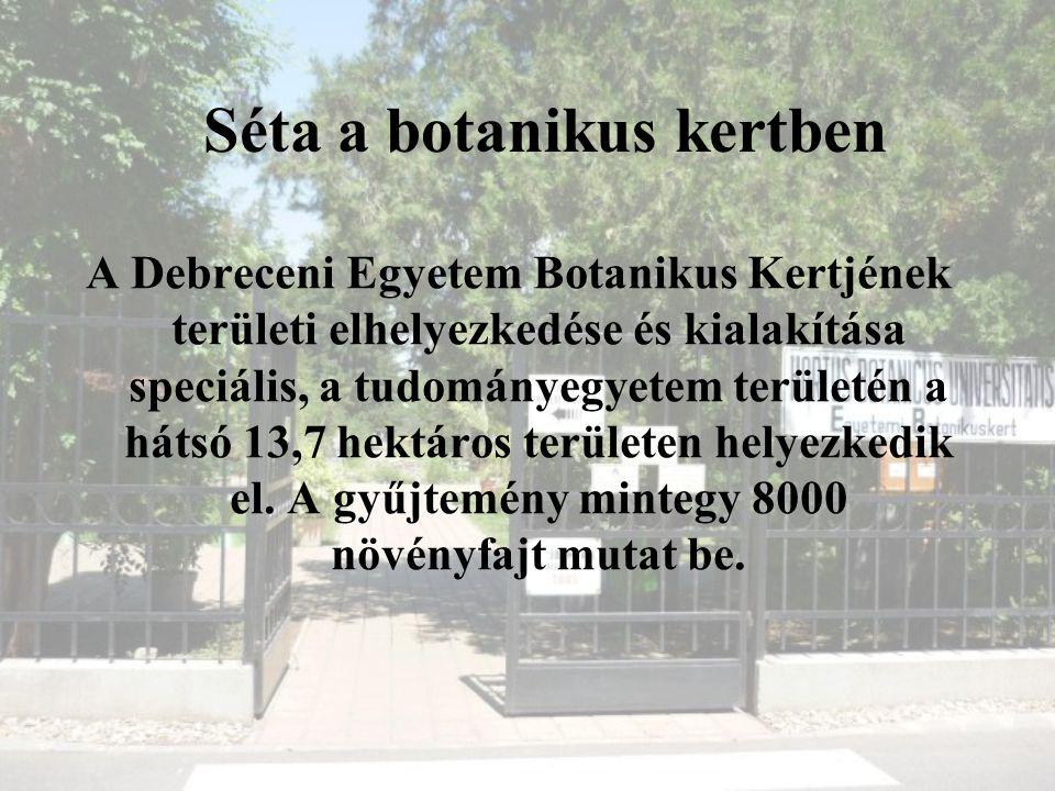 Séta a botanikus kertben A Debreceni Egyetem Botanikus Kertjének területi elhelyezkedése és kialakítása speciális, a tudományegyetem területén a hátsó