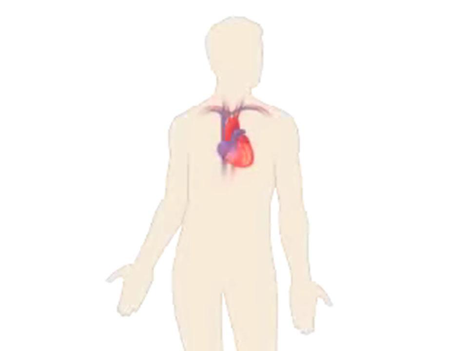 A szív gyógyszeres kezelési lehetőségei szívelégtelenség angina pectoris ritmuszavar infarktus