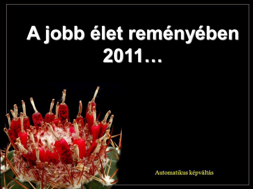 A jobb élet reményében 2011… Automatikus képváltás