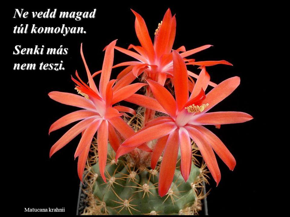 Neowerdermannia vorwerkii Az élet túl rövid a gyűlölködésre, ne pazarolj rá időt.
