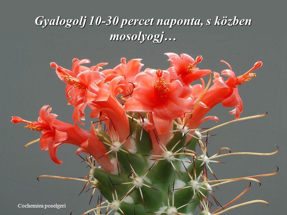 Echinomastus durangensis Életünket ne hasonlítsuk másokéhoz.