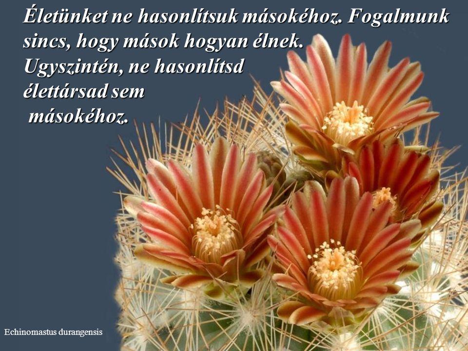 Echinocereus subinermis A vitákat nem kell mindig megnyerned.