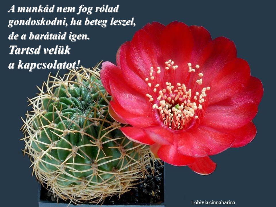 Ferobergia hybride Békélj meg múltaddal, hogy ne rontsa el a jelent. a jelent.