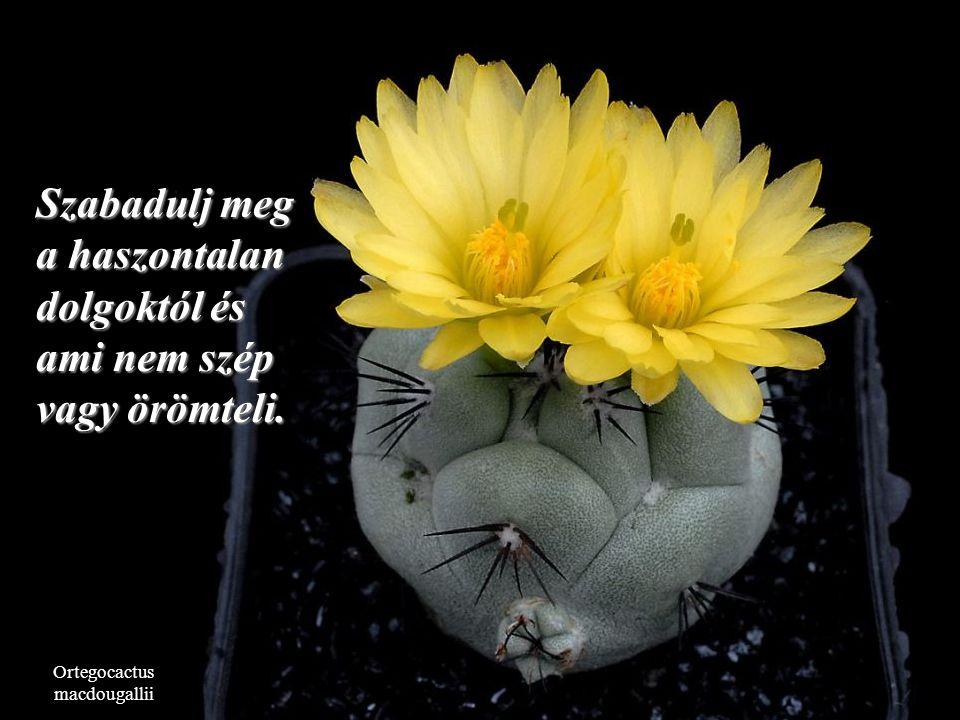 Copiapoa tenuissima Nem számít, hogy jó vagy rossz helyzetben vagy. Ez változni fog.