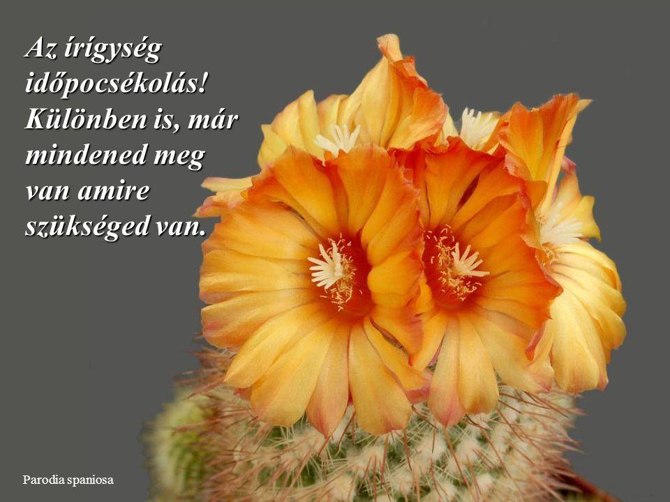 Ortegocactus macdougallii Szabadulj meg a haszontalan dolgoktól és ami nem szép vagy örömteli.