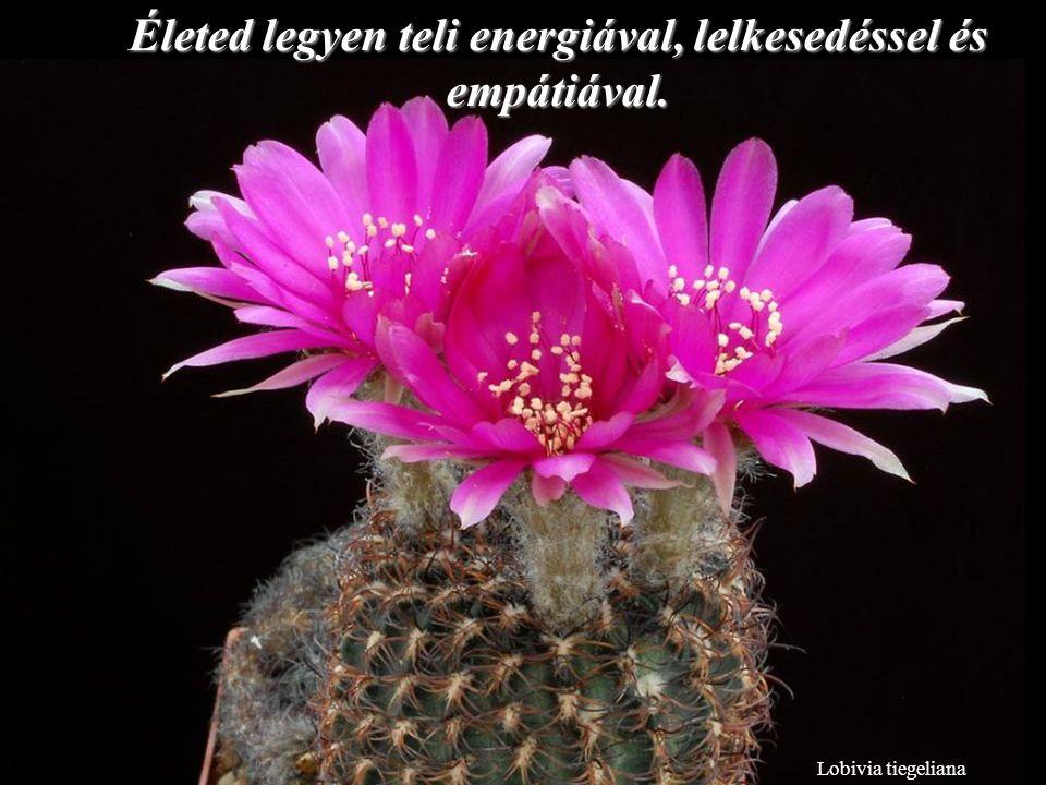 Lobivia tiegeliana Életed legyen teli energiával, lelkesedéssel és empátiával.