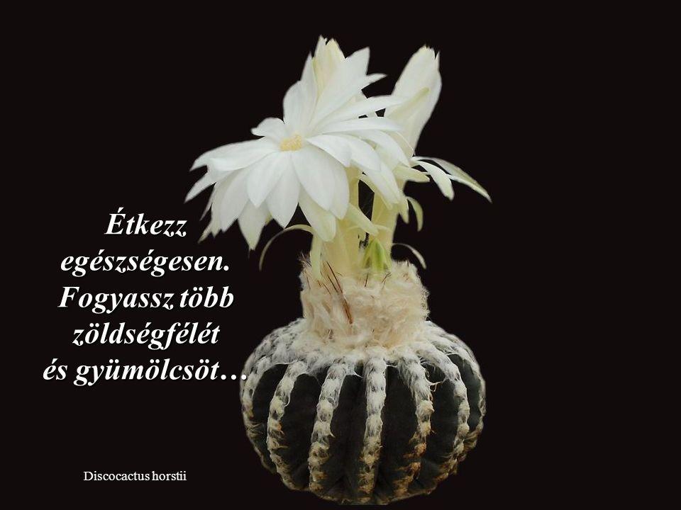 Discocactus pugionacanthus Tanulj a múlt hibáiból, de ne hagyd, hogy elrontsa a jelent.