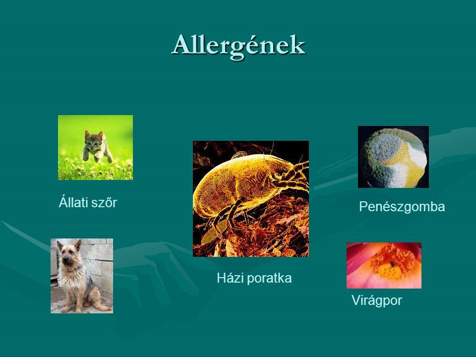 Allergének Házi poratka Virágpor Penészgomba Állati szőr