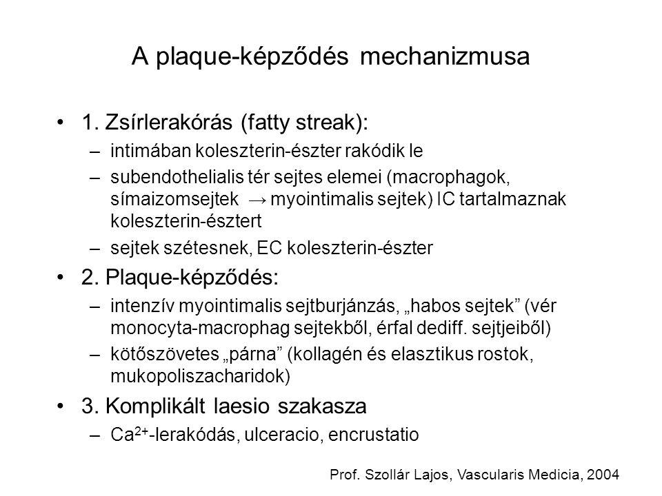 A plaque-képződés mechanizmusa 1. Zsírlerakórás (fatty streak): –intimában koleszterin-észter rakódik le –subendothelialis tér sejtes elemei (macropha