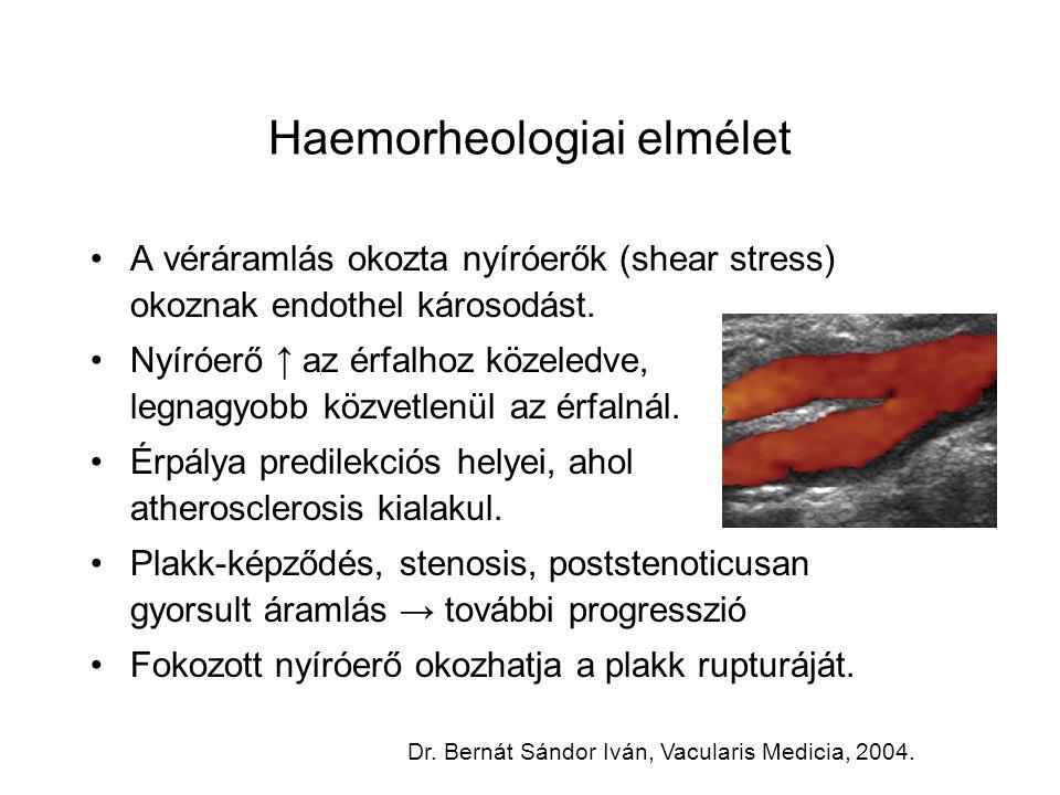 Haemorheologiai elmélet A véráramlás okozta nyíróerők (shear stress) okoznak endothel károsodást. Nyíróerő ↑ az érfalhoz közeledve, legnagyobb közvetl