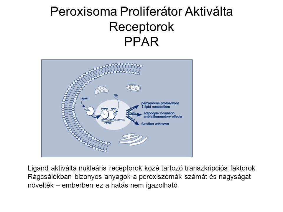 Peroxisoma Proliferátor Aktiválta Receptorok PPAR A PPAR izotípusok szöveti eloszlása és élettani feladataik különbözőek.